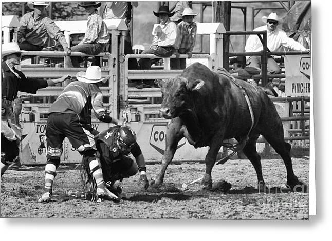 Bull Riding Greeting Cards - Rodeo Mexican Standoff Greeting Card by Bob Christopher