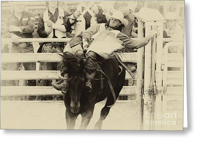 Bucking Horses Greeting Cards - Rodeo Show Your Stuff Greeting Card by Bob Christopher