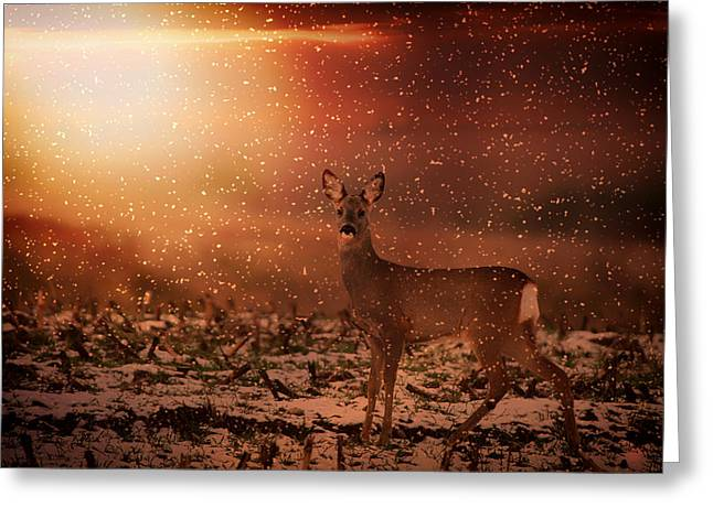 Cornstalks Greeting Cards - Roe Deer in a Wintry Sunset Greeting Card by Mountain Dreams