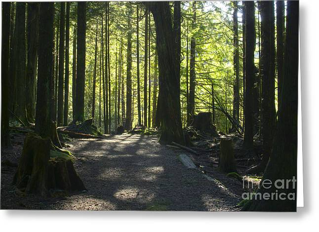 Dappled Sunlight Greeting Cards - Rolley Lake Trail Greeting Card by Sharon  Talson