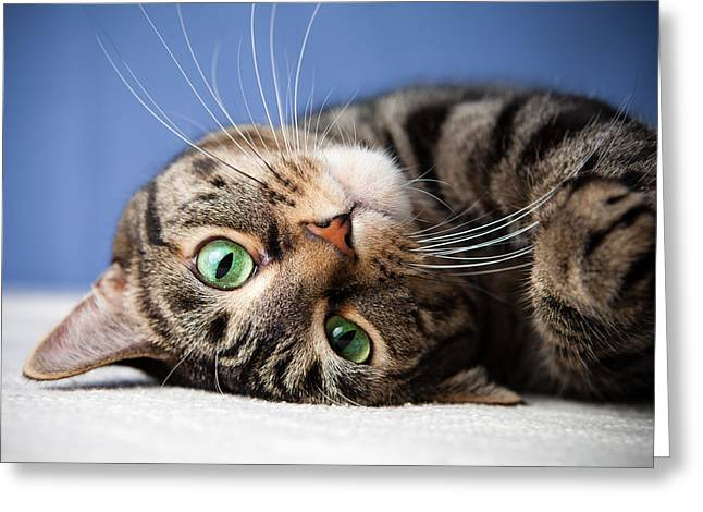 Growling Greeting Cards - Rolling Cat Greeting Card by Marcos Lins