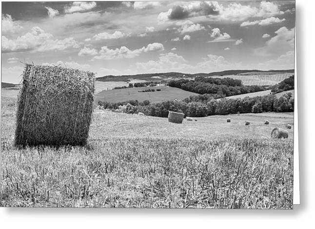 Tony Murray Greeting Cards - Rolling Fields Greeting Card by Tony Murray