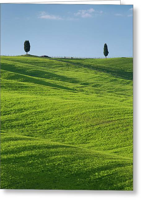 Rolling Hills And Cypress Tress Greeting Card by Brian Jannsen