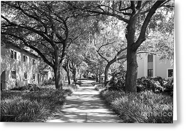 Rollins College Landscape Greeting Card by University Icons