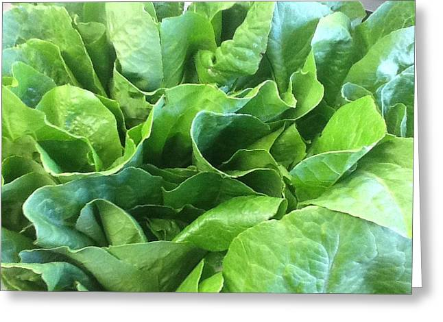 Romaine Greeting Cards - Romaine Lettuce Greeting Card by Brian  Hanna