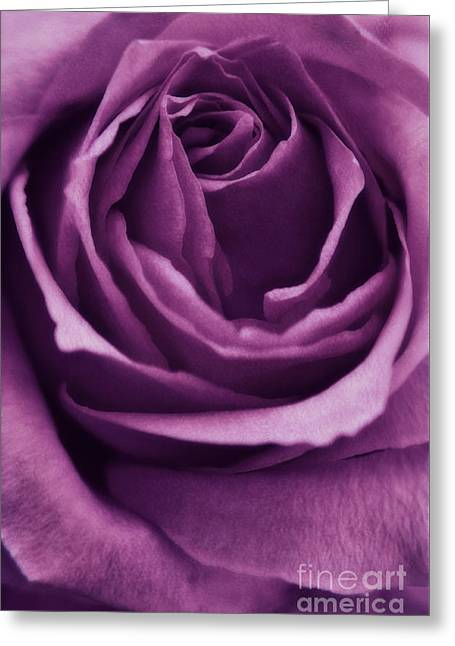 Purple Roses Greeting Cards - Romance III Greeting Card by Angela Doelling AD DESIGN Photo and PhotoArt