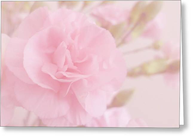 Pink Carnations Greeting Cards - Romance Greeting Card by Sharon Lisa Clarke