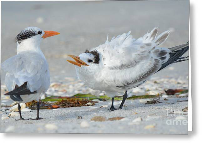 Water Bird Greeting Cards - Romancing of the Terns Greeting Card by Patricia Twardzik