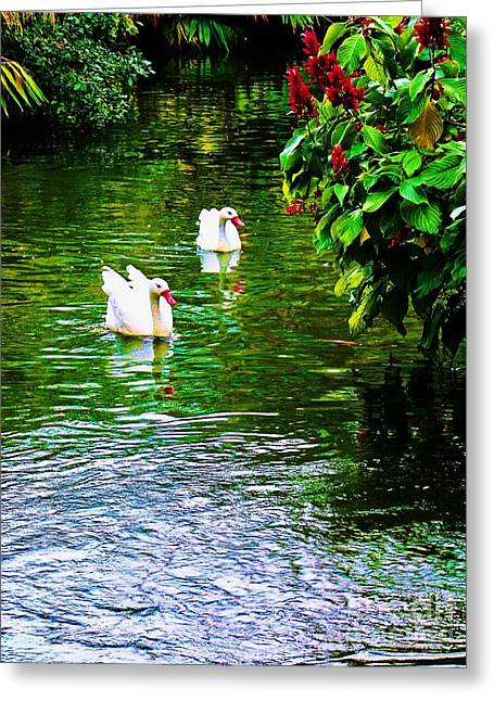 Swans... Greeting Cards - Romantic Greeting Card by Chuck  Hicks