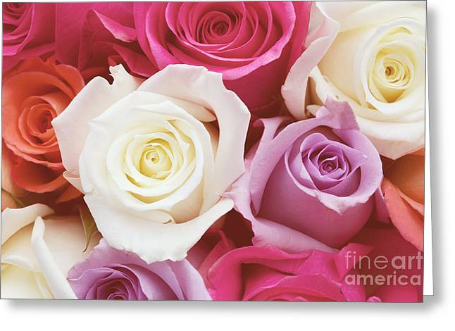 Rose Photos Greeting Cards - Romantic Rose Garden Greeting Card by Kim Fearheiley