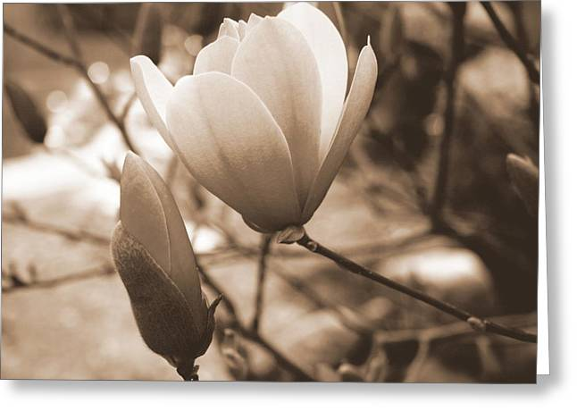 Romantic Vintage Magnolia Greeting Card by Kay Novy