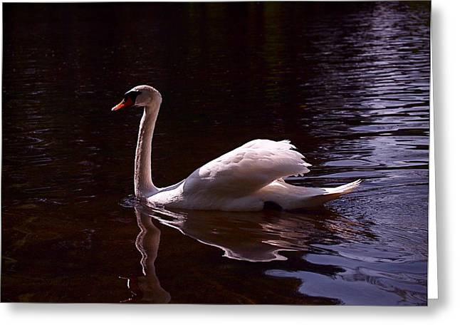 White Swan Greeting Cards - Romeo or Juliet Greeting Card by Rona Black