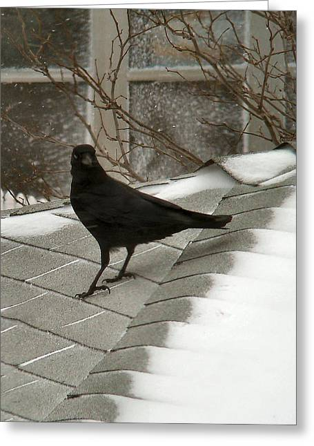 Winter Crows Greeting Cards - Roof Crow Greeting Card by Gothicolors Donna Snyder