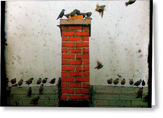 Baby Bird Greeting Cards - Roof Top Hoppers Greeting Card by Gothicolors Donna Snyder