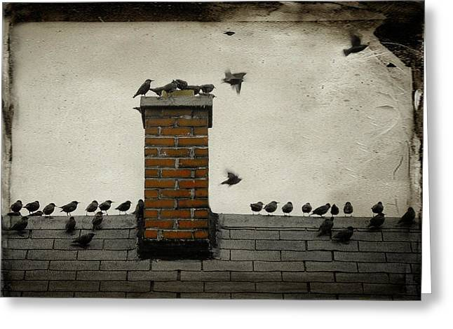 Avian Art Greeting Cards - Rooftop Meeting Greeting Card by Gothicolors Donna Snyder