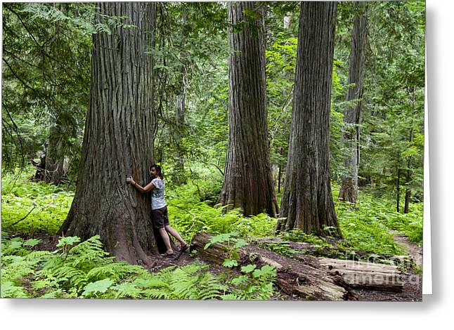 Tree Huggers Greeting Cards - Roosevelt Grove Of Ancient Cedars, Idaho Greeting Card by William H. Mullins
