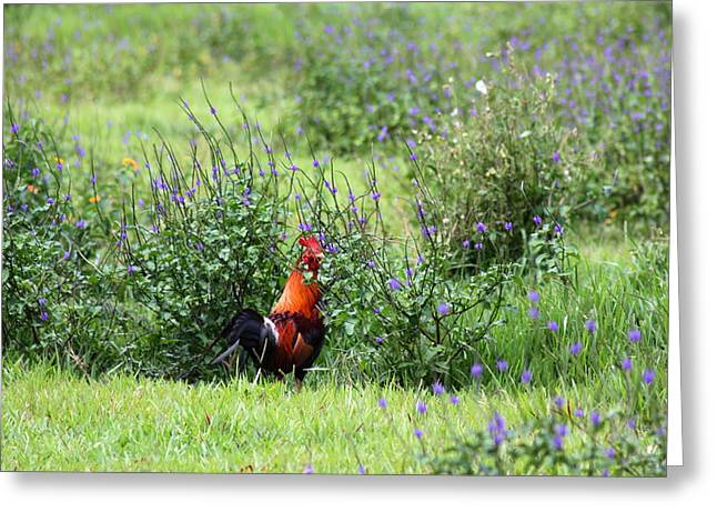 Iphonesia Greeting Cards - Rooster Country Greeting Card by Ange Sylvestri