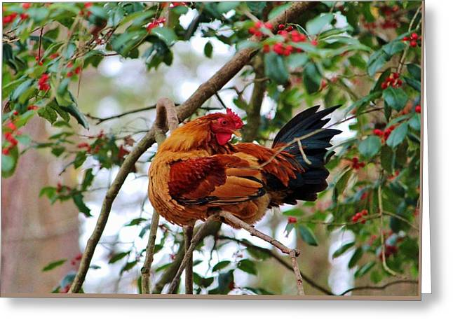 Rooster In A Tree Greeting Card by Cynthia Guinn