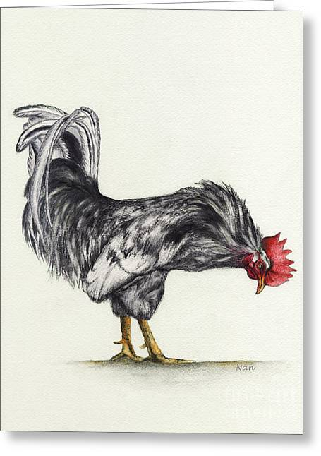 Rooster Greeting Card by Nan Wright