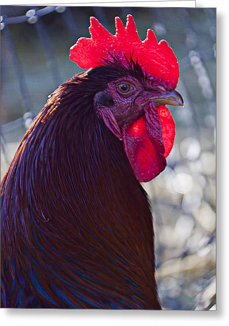 Animal Eyes Greeting Cards - Rooster with bright red comb Greeting Card by Garry Gay
