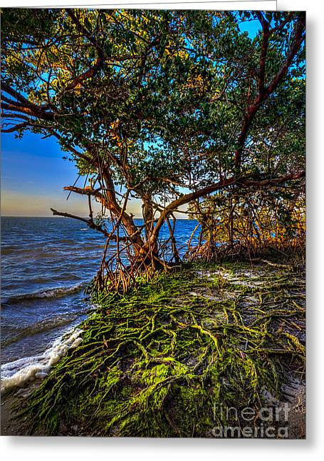 Rooted In Truth Greeting Card by Marvin Spates