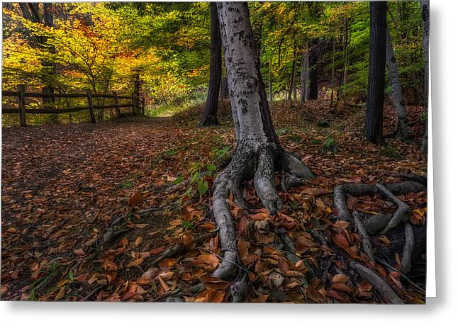 Tree Roots Photographs Greeting Cards - Rooted Greeting Card by Mark Papke