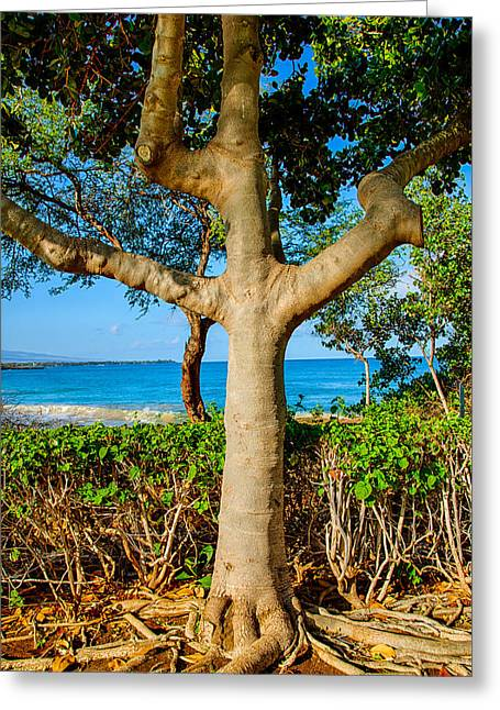 Tree Roots Mixed Media Greeting Cards - Rooted Tropical Tree Greeting Card by Omaste Witkowski