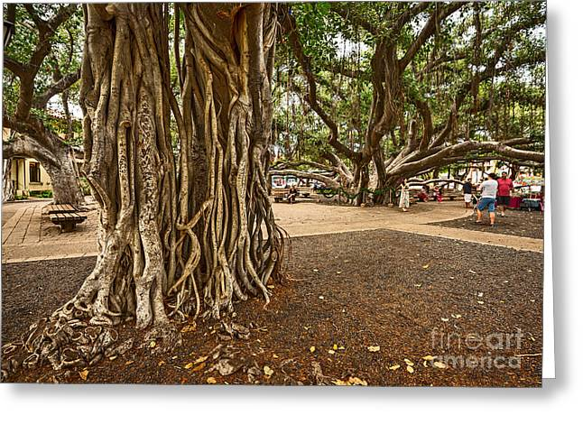 Lahaina Greeting Cards - Roots - Banyan Tree Park in Maui Greeting Card by Jamie Pham