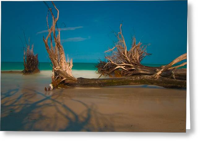 Roots 1 Greeting Card by Rolf Bertram