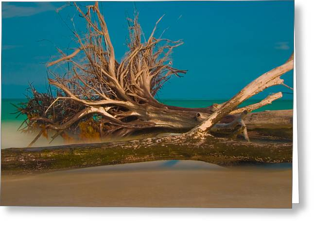 Roots 2 Greeting Card by Rolf Bertram