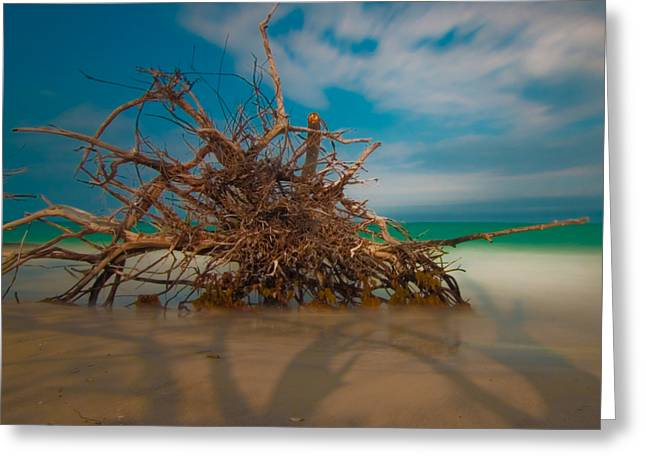 Roots 3 Greeting Card by Rolf Bertram