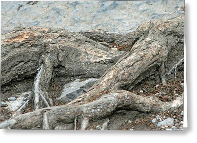 Tree Roots Greeting Cards - Roots 4 Greeting Card by Do-it-again Photography