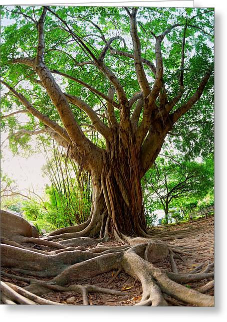 Tree Roots Greeting Cards - Roots Greeting Card by Alexey Stiop