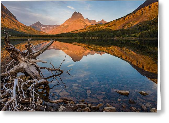 Tree Roots Photographs Greeting Cards - Roots and Reflections on Swiftcurrent Lake Greeting Card by Greg Nyquist