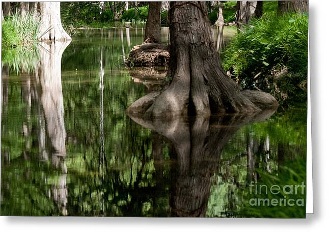 Barbara Shallue Photographs Greeting Cards - Roots Greeting Card by Barbara Shallue
