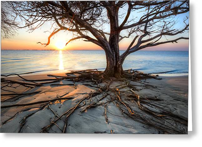 Tropical Beach Greeting Cards - Roots Beach Greeting Card by Debra and Dave Vanderlaan