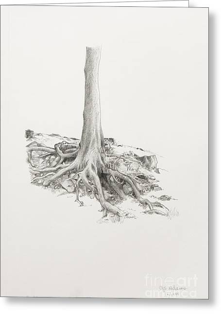 Tree Roots Drawings Greeting Cards - Roots Greeting Card by Cheryl E Adams