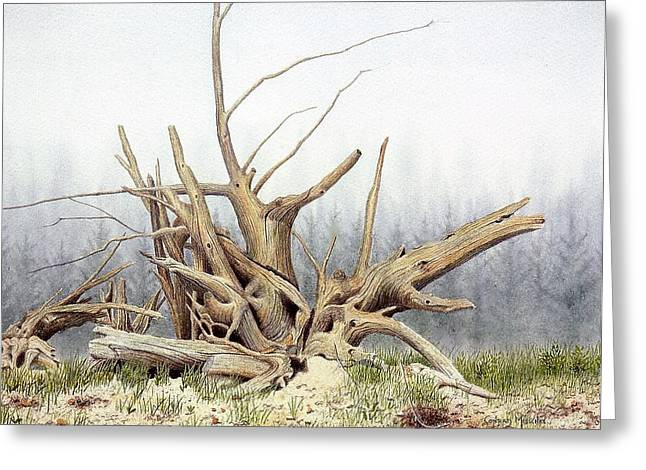 Tree Roots Paintings Greeting Cards - Roots Greeting Card by Conrad Mieschke