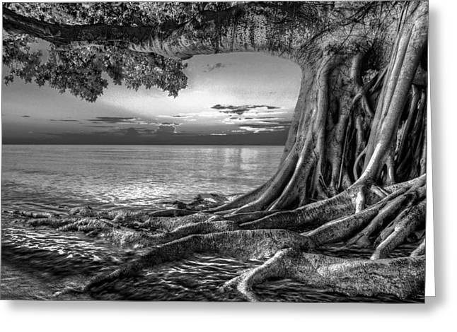 Foggy Beach Greeting Cards - Roots Greeting Card by Debra and Dave Vanderlaan