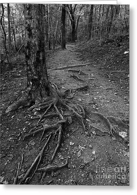 Tree Roots Greeting Cards - Roots II Greeting Card by Sean Cupp