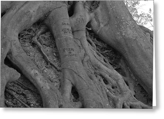 Roots II Greeting Card by Suzanne Gaff