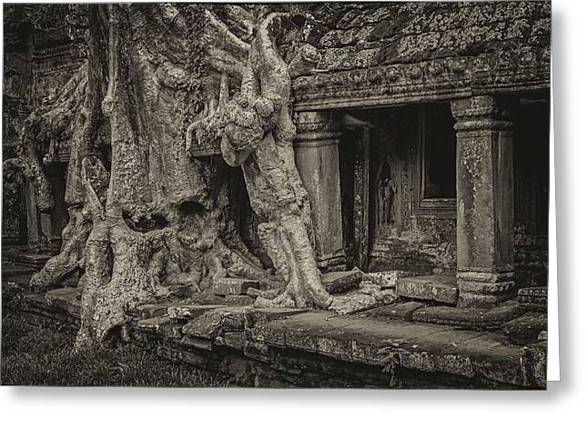 Tree Roots Art Greeting Cards - Roots in Ruins Greeting Card by Hitendra SINKAR
