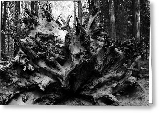 Tree Roots Greeting Cards - Roots Greeting Card by Veronica Vandenburg