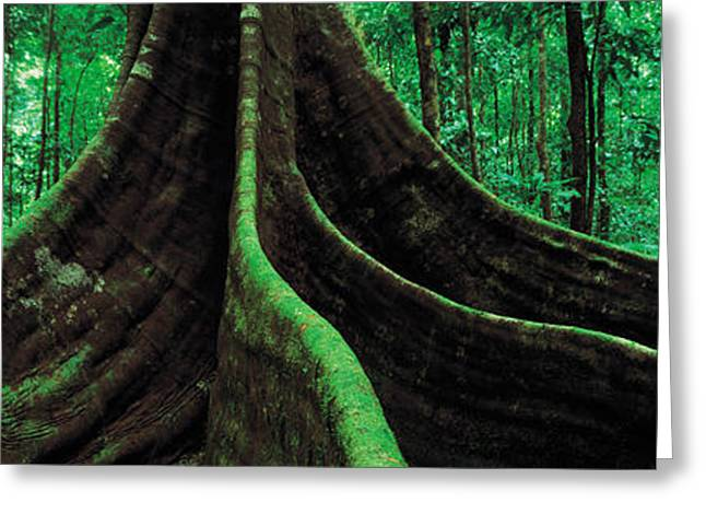 Moss Greeting Cards - Roots Of A Giant Tree, Daintree Greeting Card by Panoramic Images