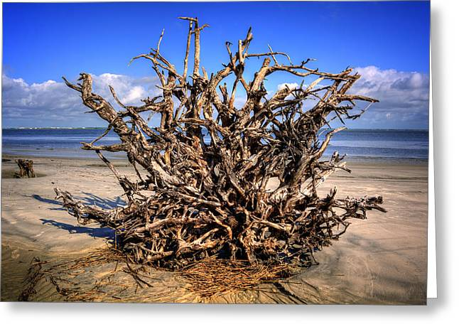 Chrystal Greeting Cards - Roots on Jekyll Island Greeting Card by Chrystal Mimbs