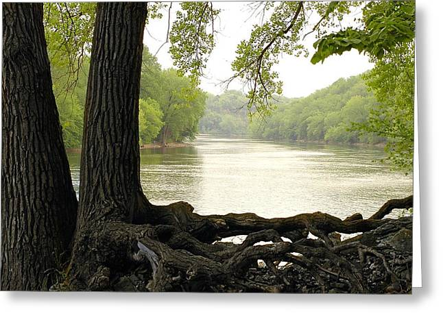 Mississippi Photographs Greeting Cards - Roots on the Mississippi Greeting Card by Jim Hughes