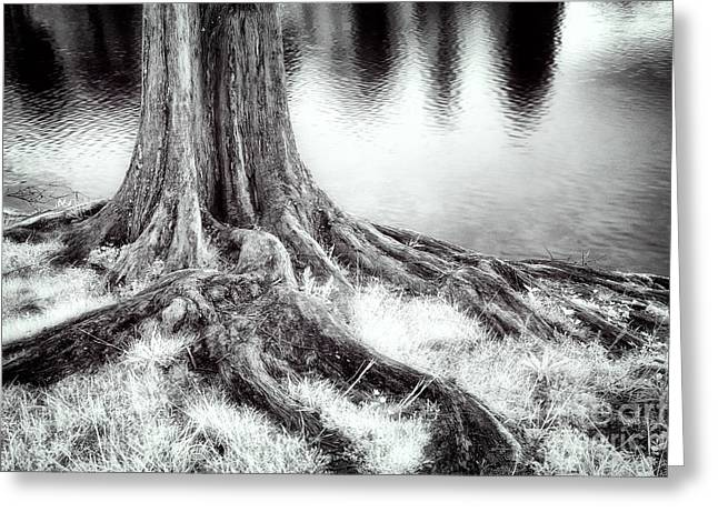 Tree Roots Photographs Greeting Cards - Roots Run Deep - Greensboro NC Greeting Card by Dan Carmichael