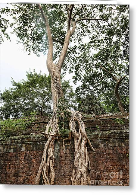 Tree Roots Greeting Cards - Roots Ta Prohm III Greeting Card by Chuck Kuhn