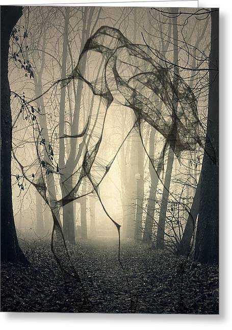 Tree Roots Greeting Cards - Roots That Hold  Greeting Card by Jerry Cordeiro