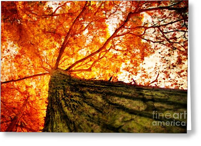 Plant Hollywood Greeting Cards - Roots to Branches III Greeting Card by Floyd Menezes